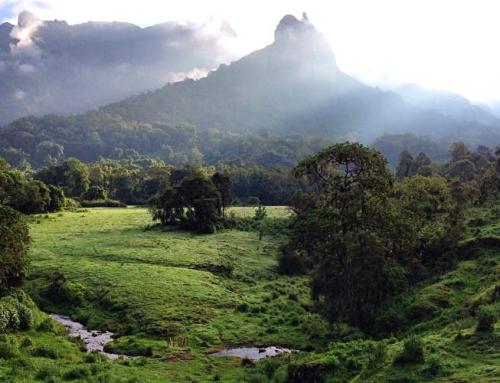 Forget the Big Five – visit Ethiopia's wonderful wildlife instead